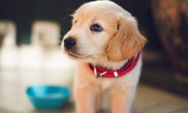 Bringing Home a Rescue Dog: Advice for First-Time Owners